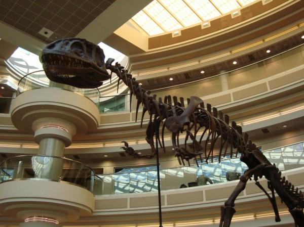 AA-Yangchuanosaurus