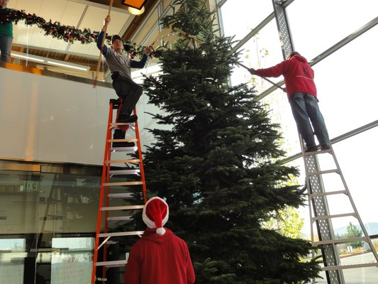 MJW Tree Set Up Service