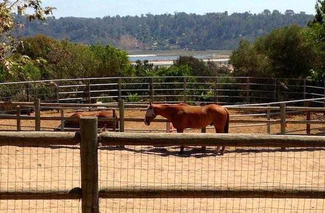 Feather Acre Farm horse view