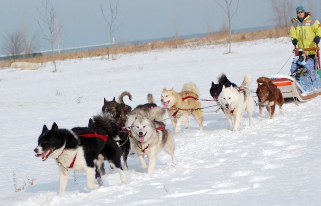 polar-adventure-days