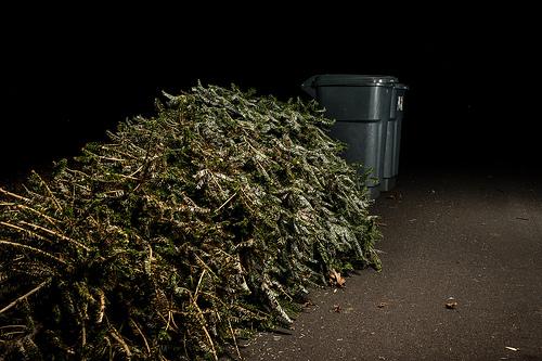 tree trash