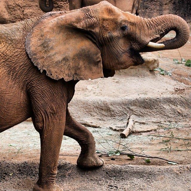 ZooAtlantaElephant