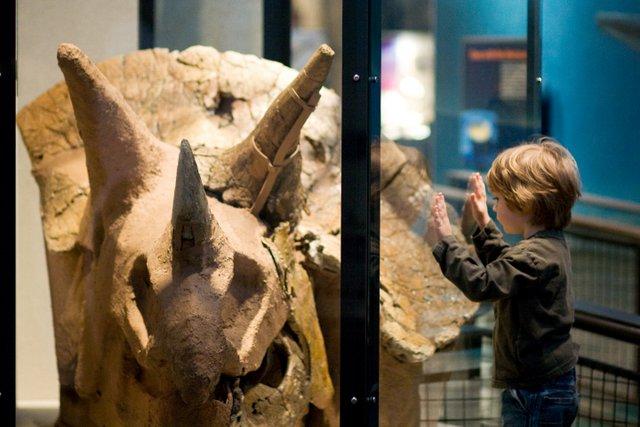 Dino Day - Burke Museum