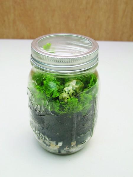 Mason Jar pp 145