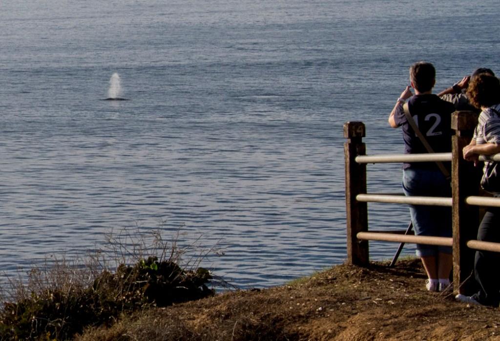pointe vincent whale watchers