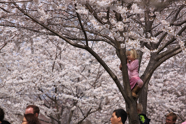 cherry-blossom-girl-in-tree