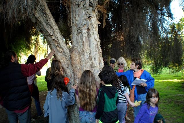 Tree Safari for Kids