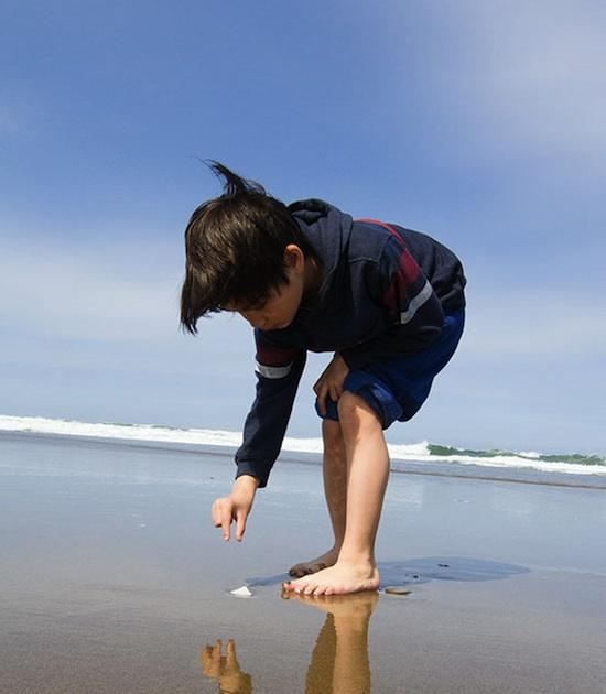 shells_oregon_coast