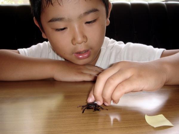 bug kids