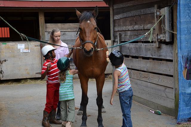 horse-grooming
