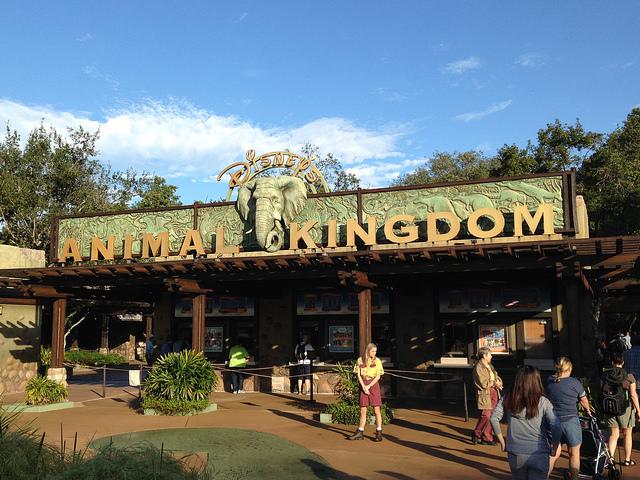 animal-kingdom-disney-world