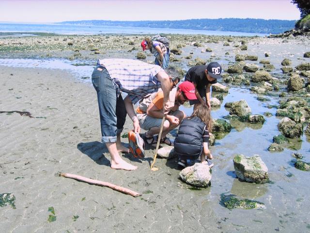 Beach Naturalist Program Seattle Aquarium