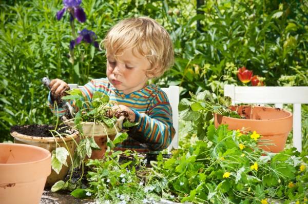 garden herb kid