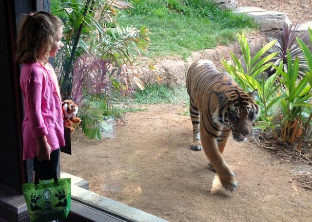 Tiger Trail 3