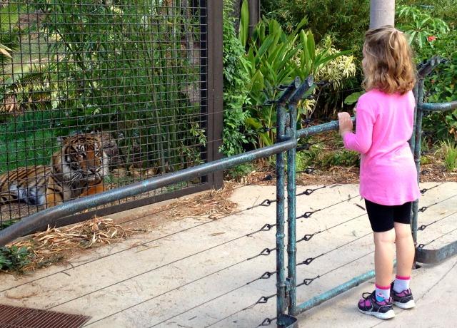Tiger Trail 4