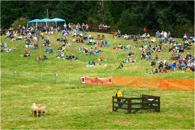 Vashon Sheep Dog Classic from website