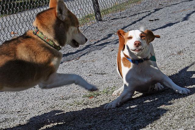 wheaton-regional-dog-park