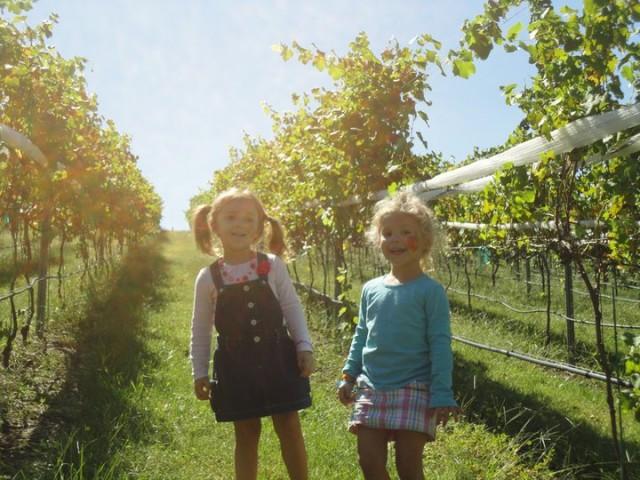 potomac-point-winery