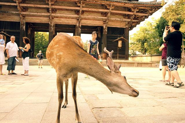 kyoto-japan-deer