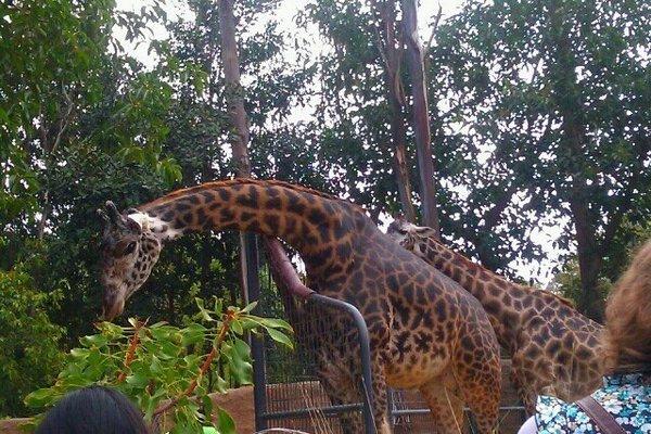 giraffe zoo