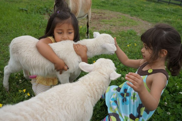 Rancho Alegre Farm