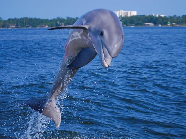 6_DolphinCruises