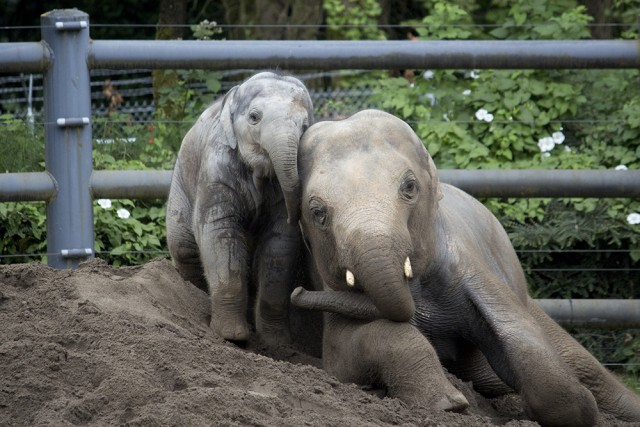 ©Oregon Zoo/ photo by Kathy Street