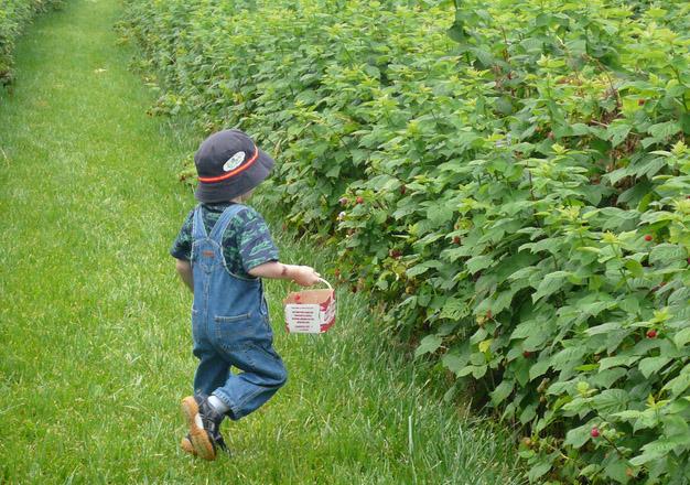 raspberry boy