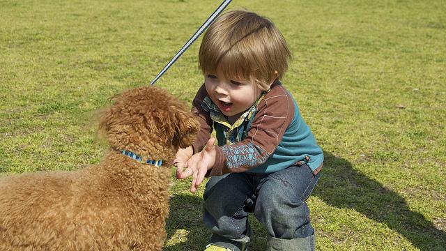 dog-and-boy