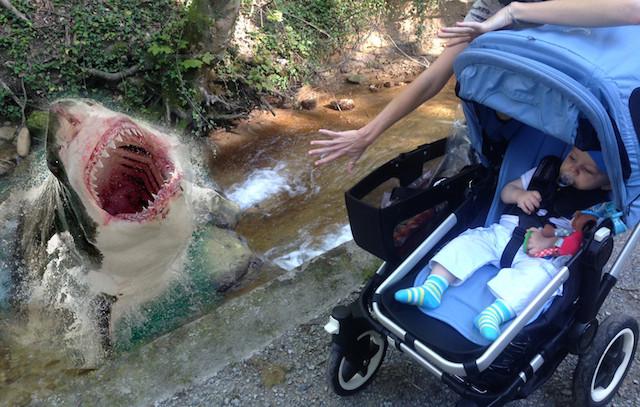 babysitting-photo-shark