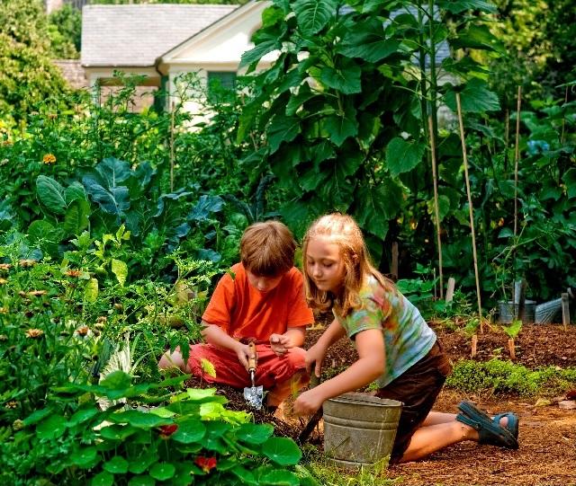 Children's Garden 2014
