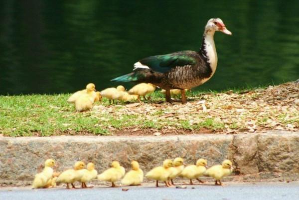DuckPond2