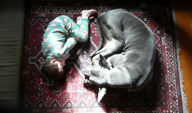 dog_kid_sleeping