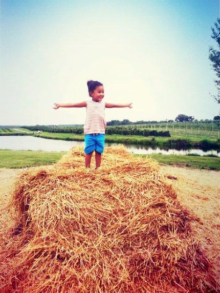 homestead-farm-hay