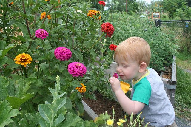 flowers-boy-smelling