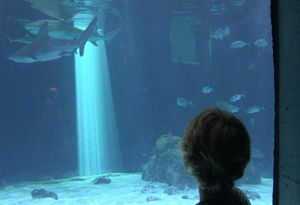 boy-sharks-aquarium