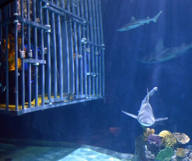 sharks-aquarium