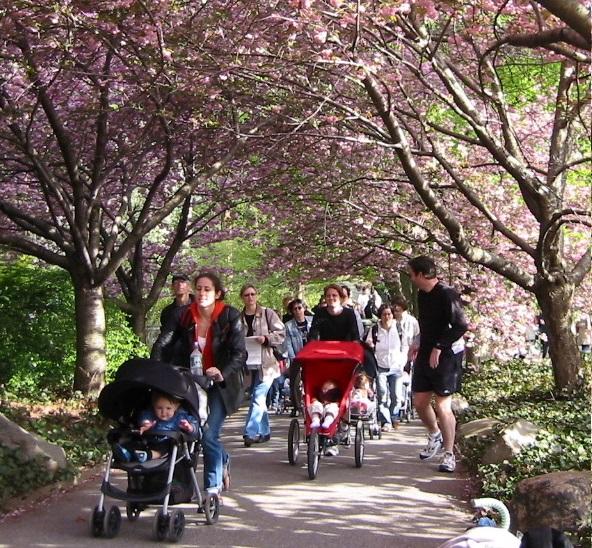 strollers park slope