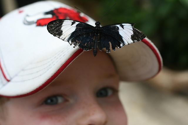 butterfly-pavilion-hat