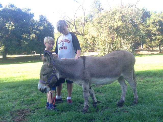 Bol Park Donkey