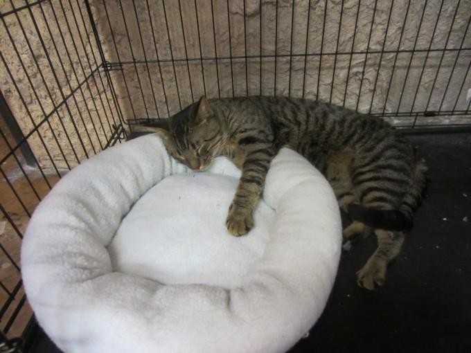 cat cafe 018