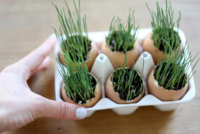 egg-planters