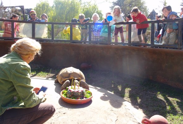 Palo Alto Junior Museum Zoo_Tortoise