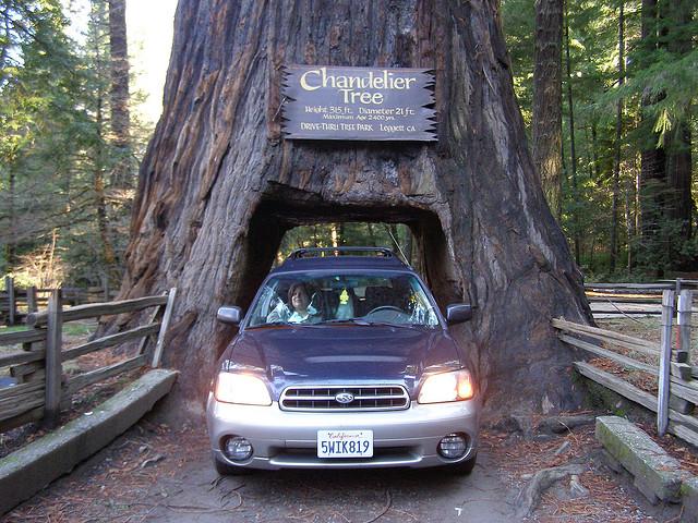 redwood-drive-through