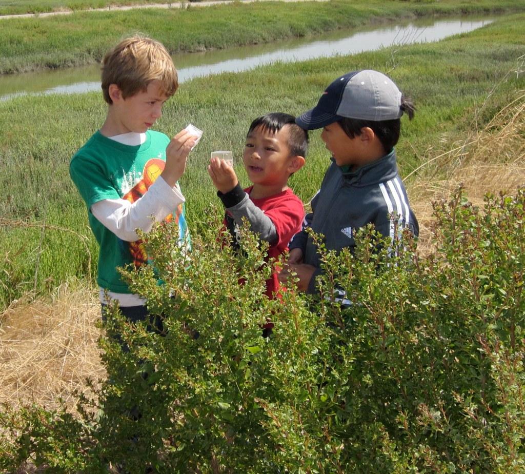 Wild and Edible Plants Hike