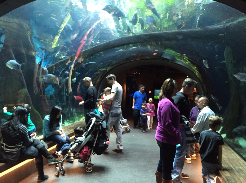 Cal Academy Aquarium