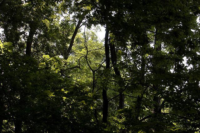 central-park-woods