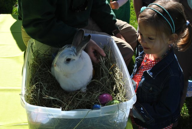 bunny bounce woodland park zoo