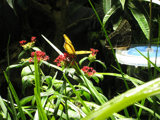 RT-butterfly