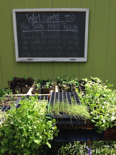 Side Yard Farm & Kitchen